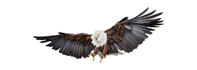 andrew-zuckerman-birds-2.jpg