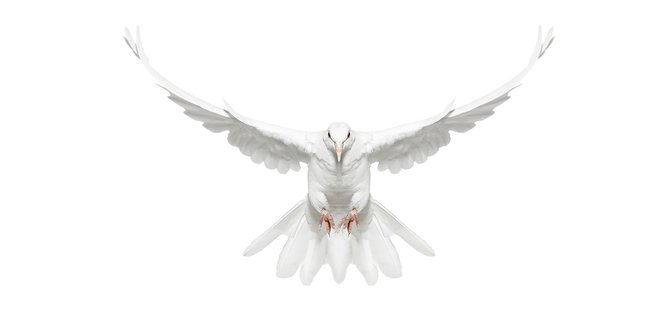 andrew-zuckerman-birds-4.jpg