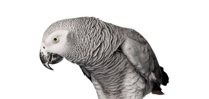 andrew-zuckerman-birds-12.jpg