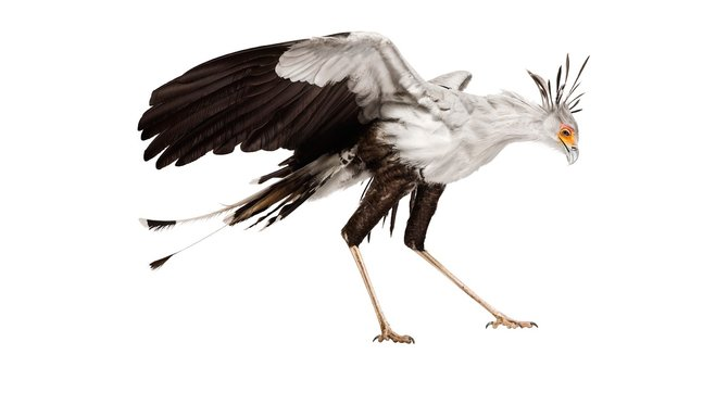 andrew-zuckerman-birds-13.jpg