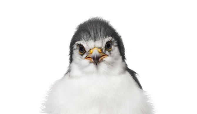 andrew-zuckerman-birds-19.jpg