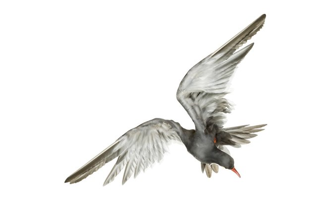 andrew-zuckerman-birds-20.jpg