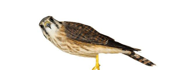 andrew-zuckerman-birds-24.jpg