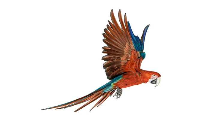 andrew-zuckerman-birds-26.jpg