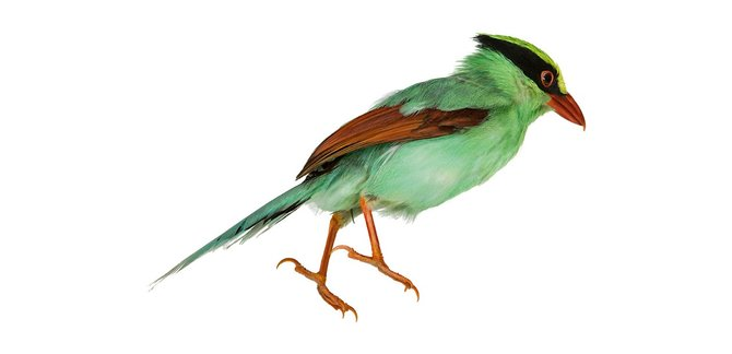andrew-zuckerman-birds-27.jpg
