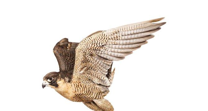 andrew-zuckerman-birds-28.jpg