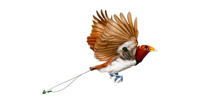 andrew-zuckerman-birds-40.jpg