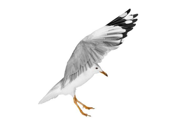 andrew-zuckerman-birds-45.jpg