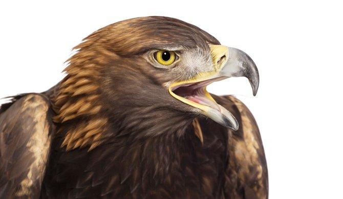 andrew-zuckerman-birds-46.jpg