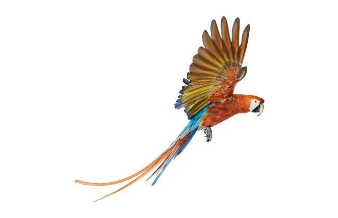 andrew-zuckerman-birds-48.jpg