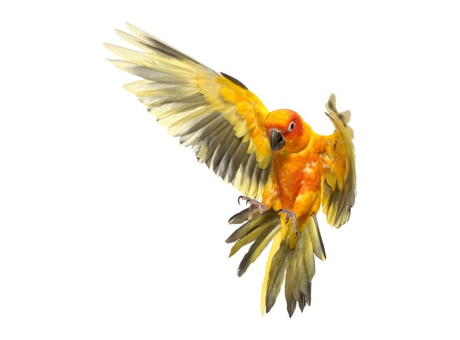 andrew-zuckerman-birds-49.jpg
