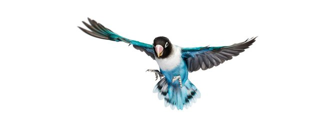 andrew-zuckerman-birds-54.jpg