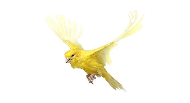 andrew-zuckerman-birds-56.jpg