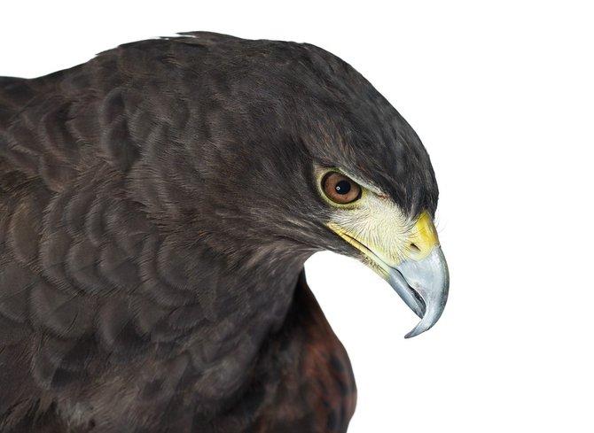 andrew-zuckerman-birds-65.jpg