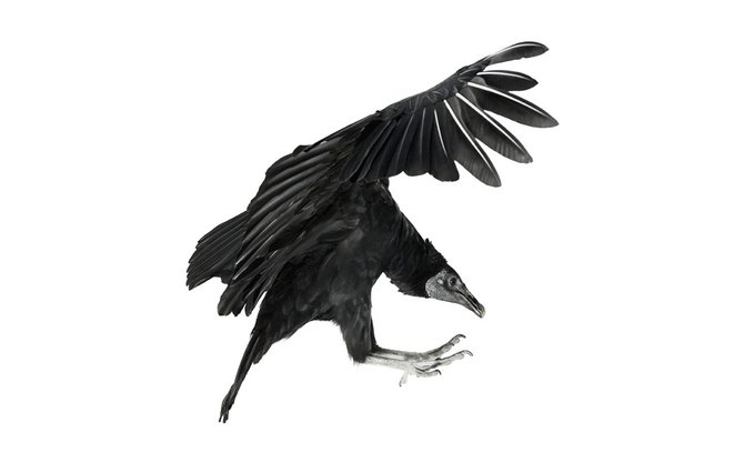 andrew-zuckerman-birds-67.jpg