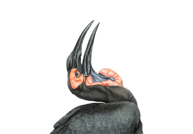 andrew-zuckerman-birds-70.jpg