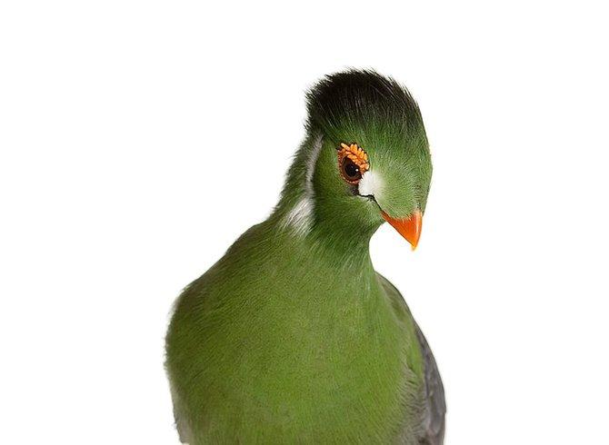 andrew-zuckerman-birds-73.jpg