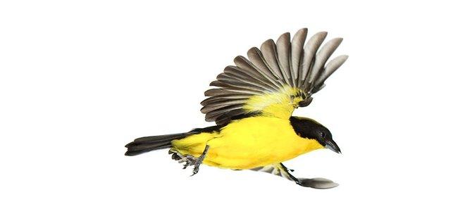 andrew-zuckerman-birds-75.jpg