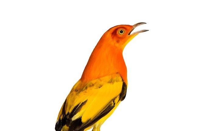 andrew-zuckerman-birds-77.jpg