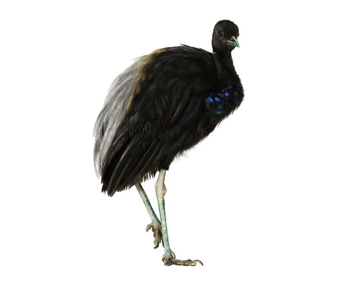 andrew-zuckerman-birds-80.jpg
