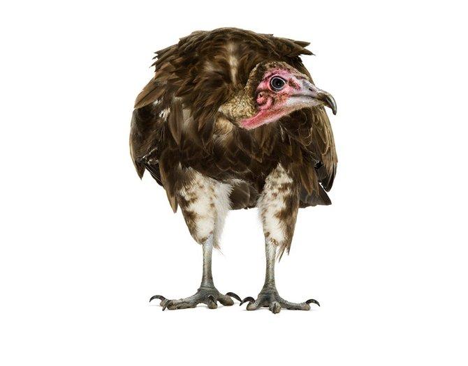 andrew-zuckerman-birds-81.jpg
