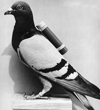 131043_carrier_pigeon.jpg
