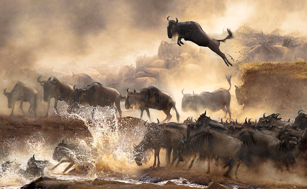 Winner, Hong Kong, National Awards: In July each year, a heart-pounding scene of wildebeest migration repeats itself in Kenya. (© Chi Hung Cheung, 2014 Sony World Photography Awards)