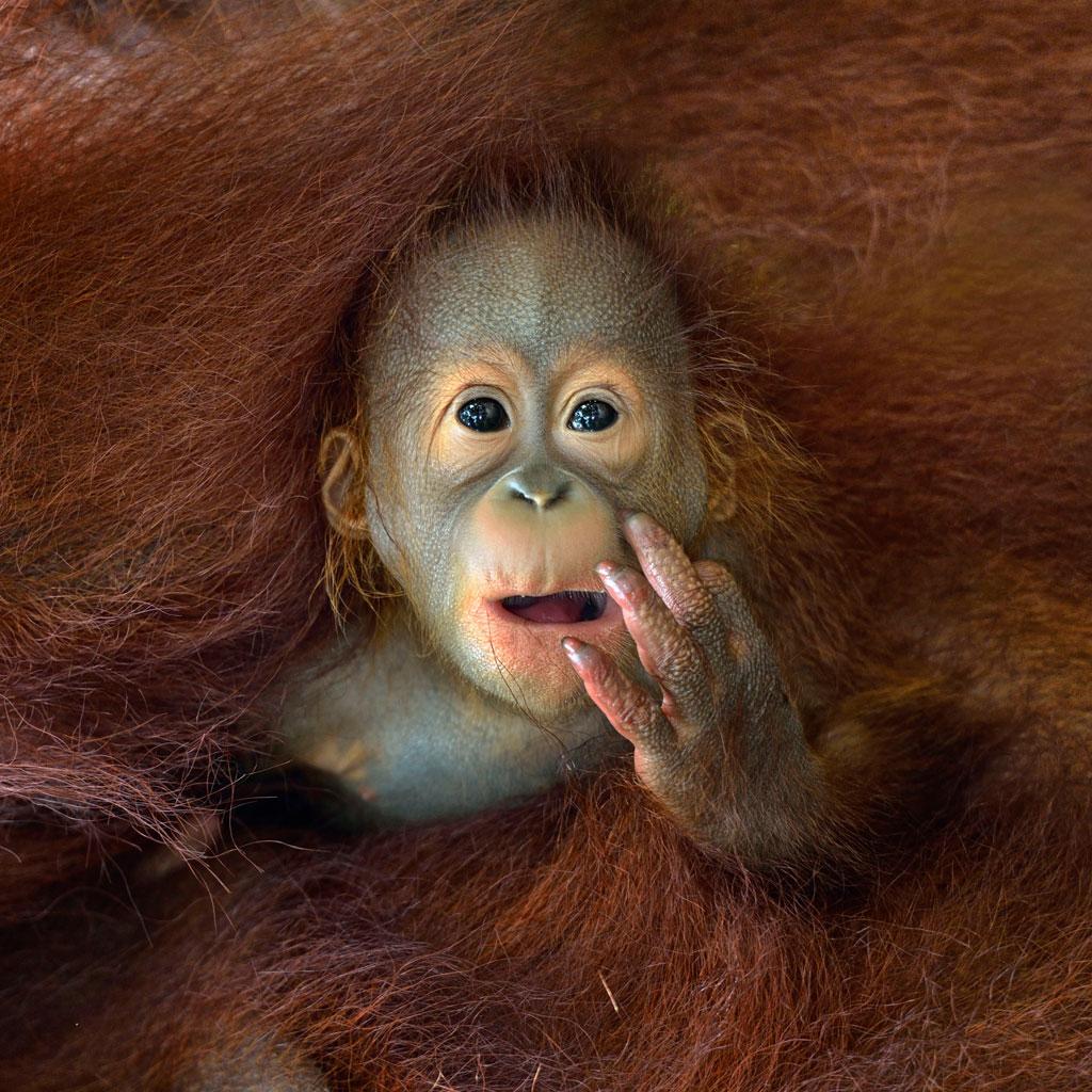 © Chin Boon Leng, Singapore, 1st place, Singapore National Award, 2014 Sony World Photography Awards