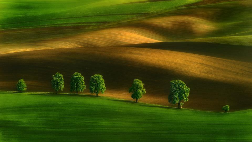 Moravian Chestnuts -  Pawel Kucharski.jpg
