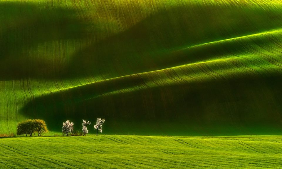 Moravian Ladies -  Pawel Kucharski.jpg