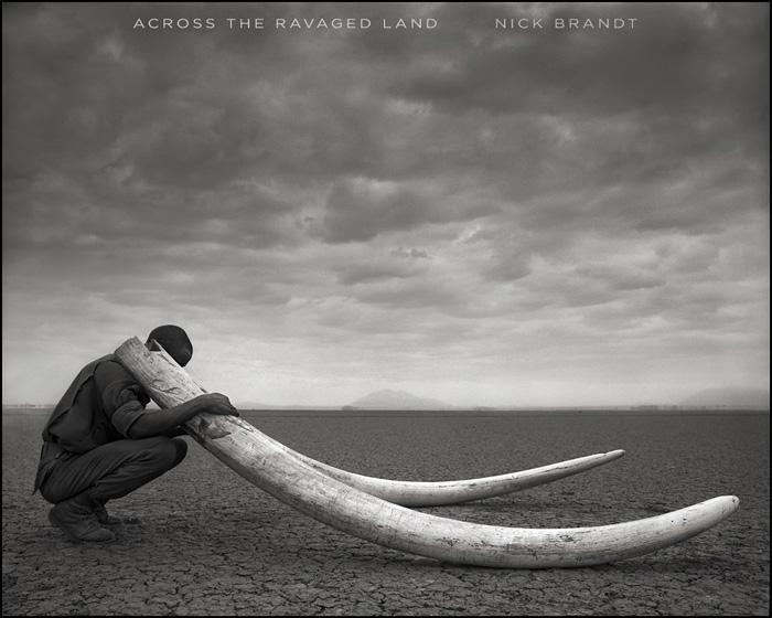 Ranger with Tusks of Killed Elephant, Amboseli 2011 © Nick Brandt