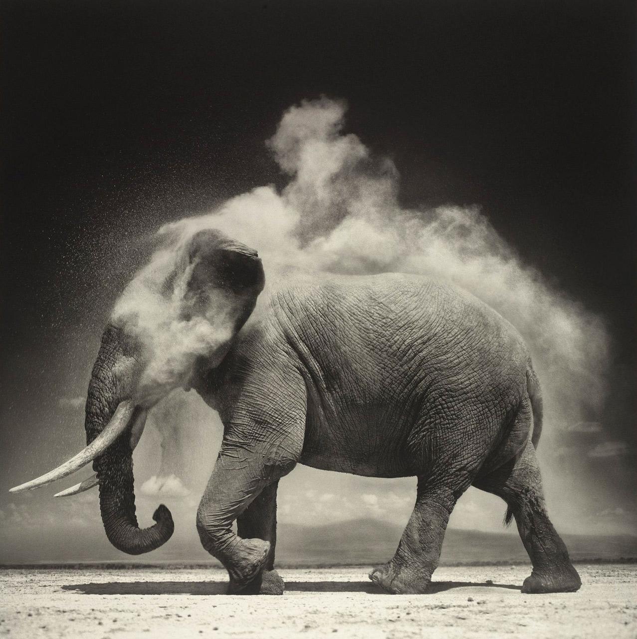 Elephant with Exploding Dust, Amboseli, 2004 © Nick Brandt