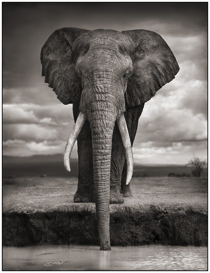 Elephant Drinking, Amboseli 2007 © Nick Brandt