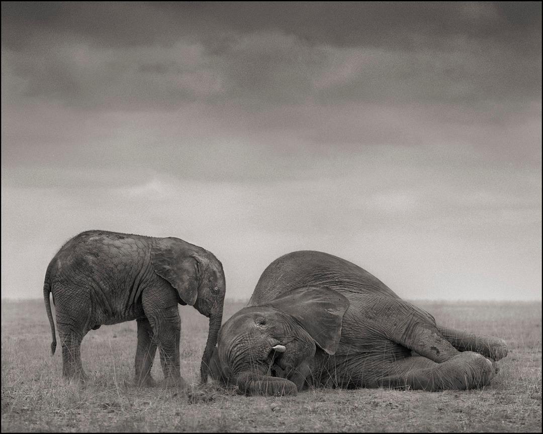 The Two Elephants, Amboseli, 2012