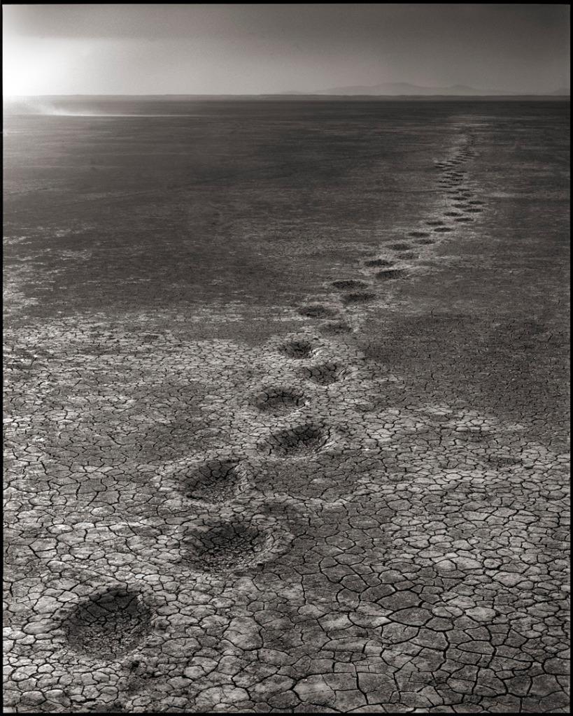 Elephant Footprints, Amboseli, 2012