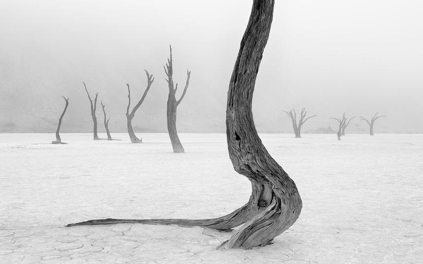 Natural World Portfolio,  Winner, Marsel van Oosten, Netherlands Dead camelthorn trees in the Namib Desert  Photograph : Marsel van Oosten/ TPOTY