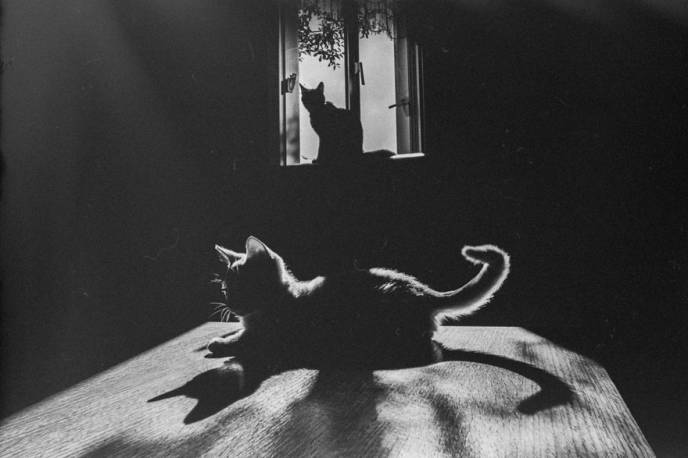 Willy Ronis,The Great Cat