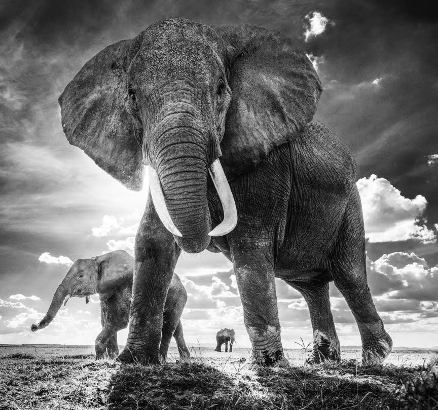 David Yarrow - The Untouchables, Amboseli, Kenya, 2017.