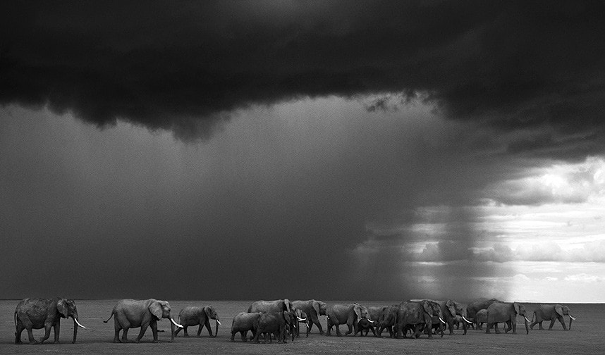 David Yarrow - The Gathering Storm, Amboseli, Kenya, 2012.
