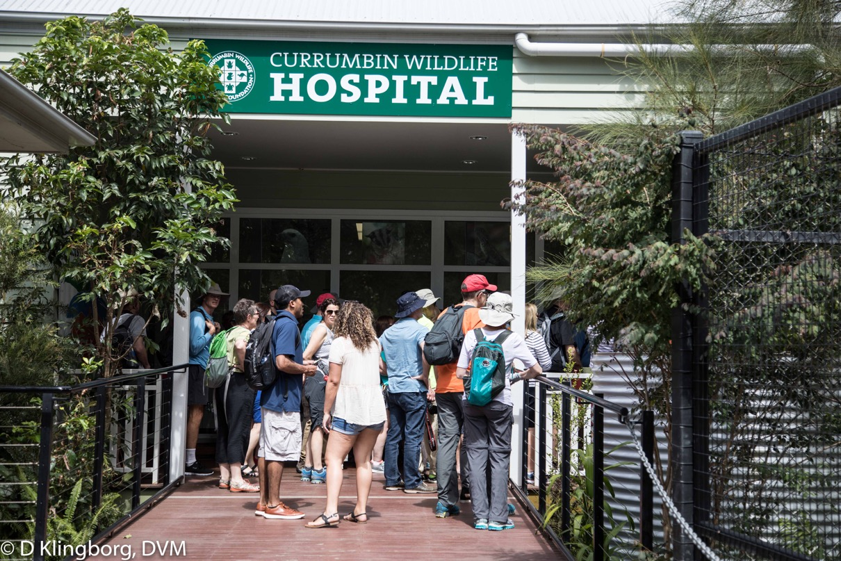 A private tour for the VETS group at the Currumbin Hospital