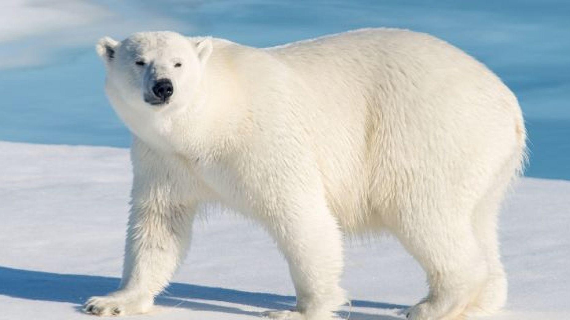 Norway- Spitsbergen 2019