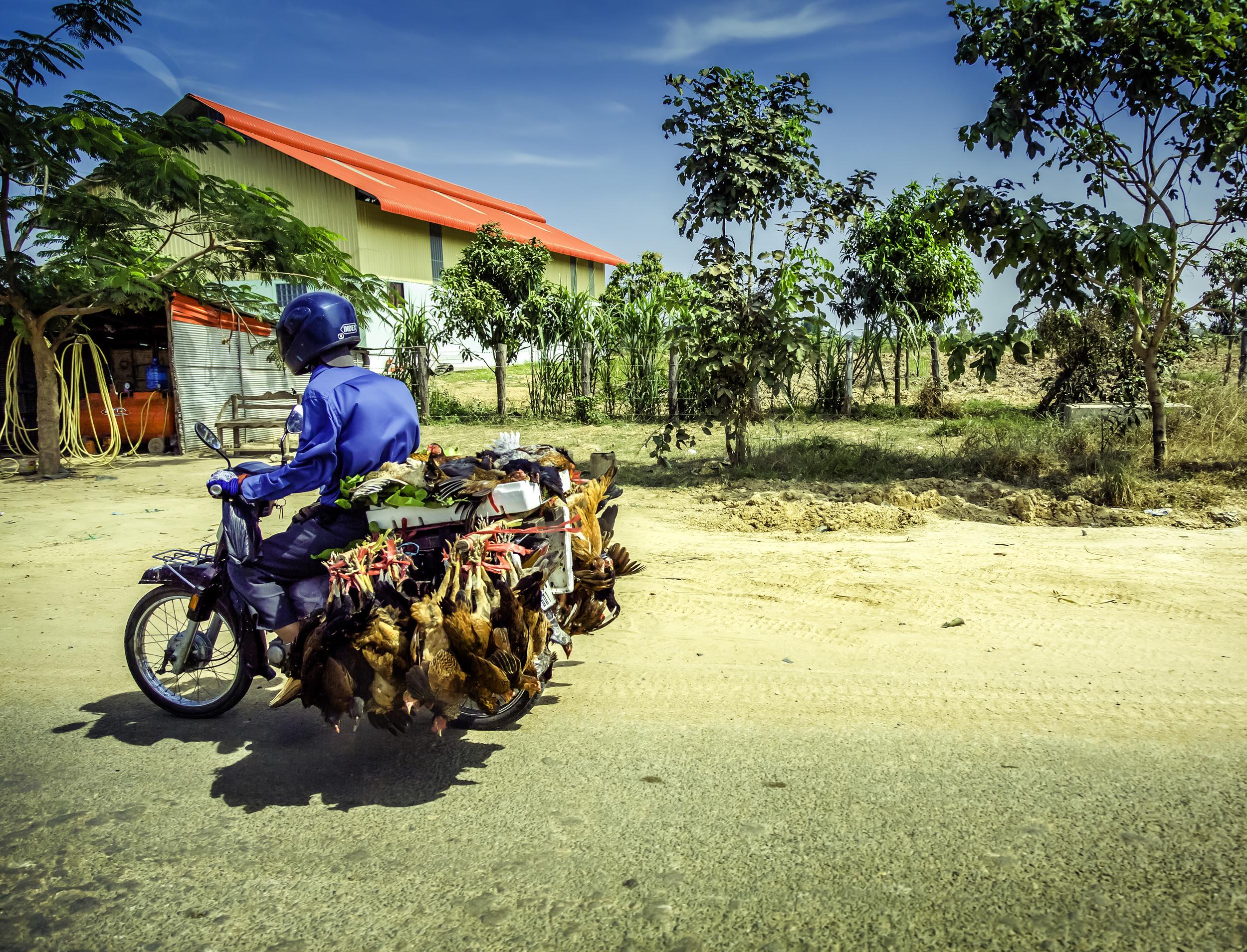 Chicken Bike