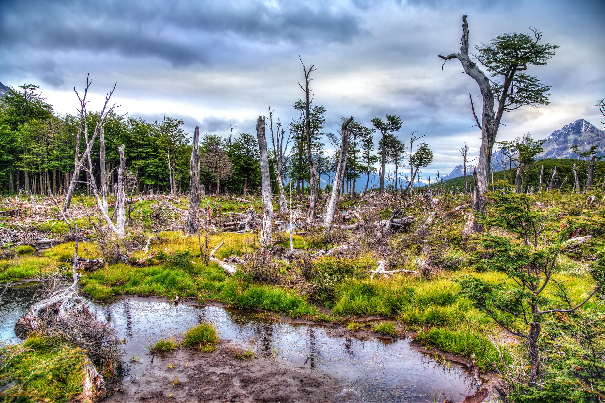 The Desolation Of Tierra del Fuego