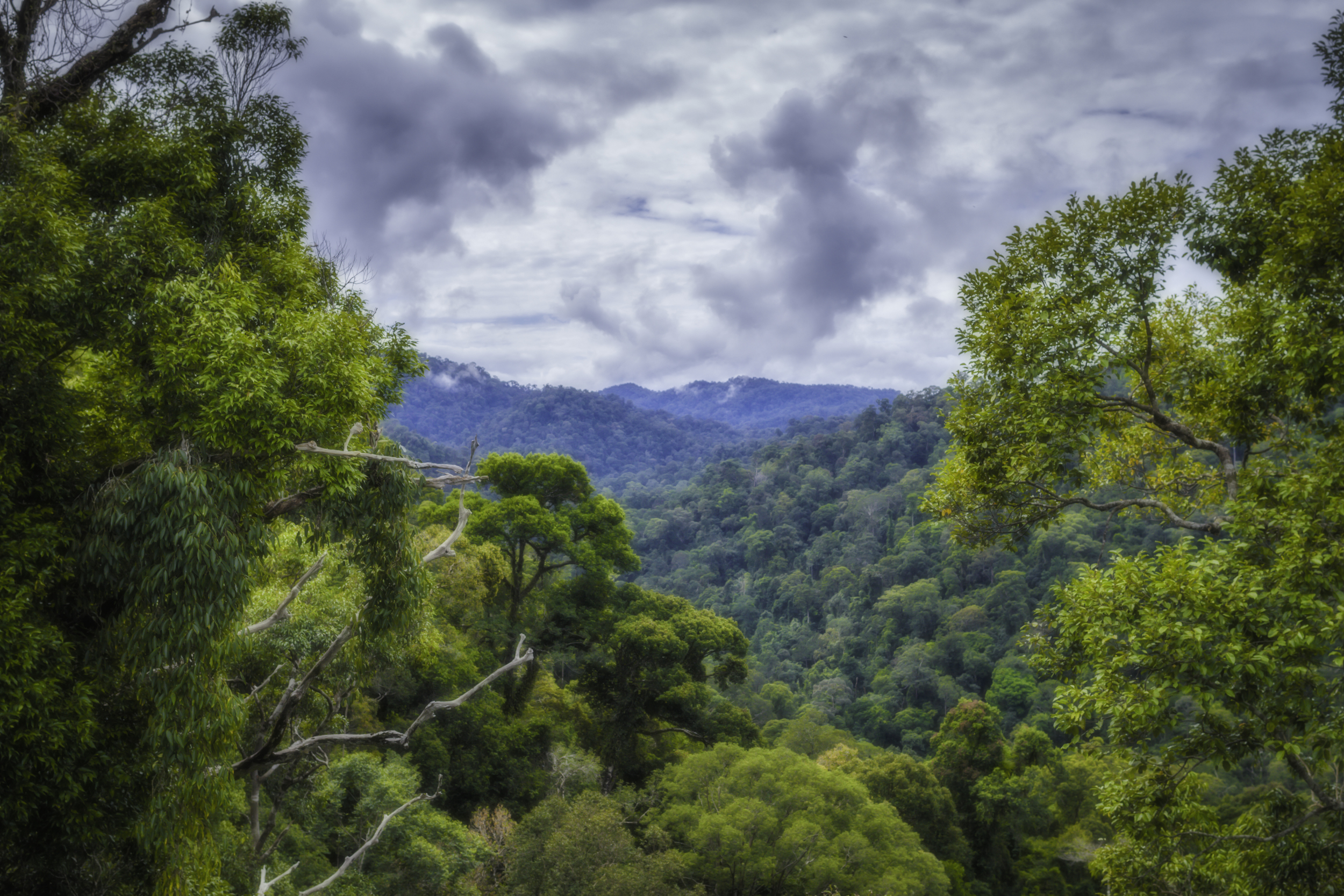 Revealing The Rainforest of Borneo