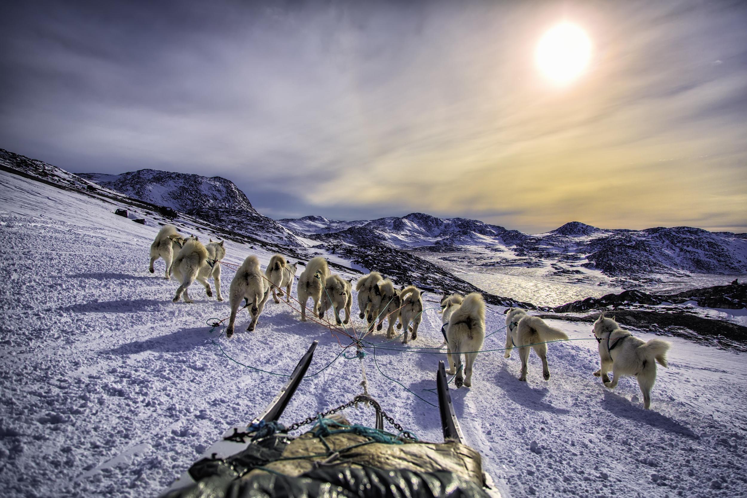 Dog Sledding Into Ilulissat