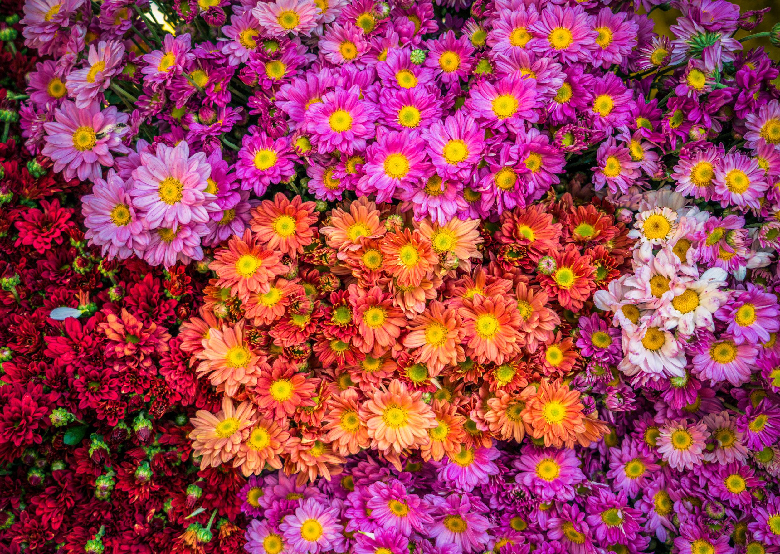 A Burst Of Color