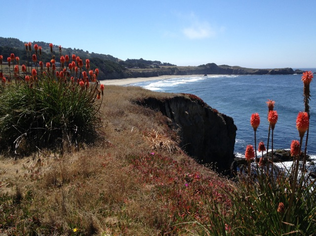 From the Sea Ranch bluff trail