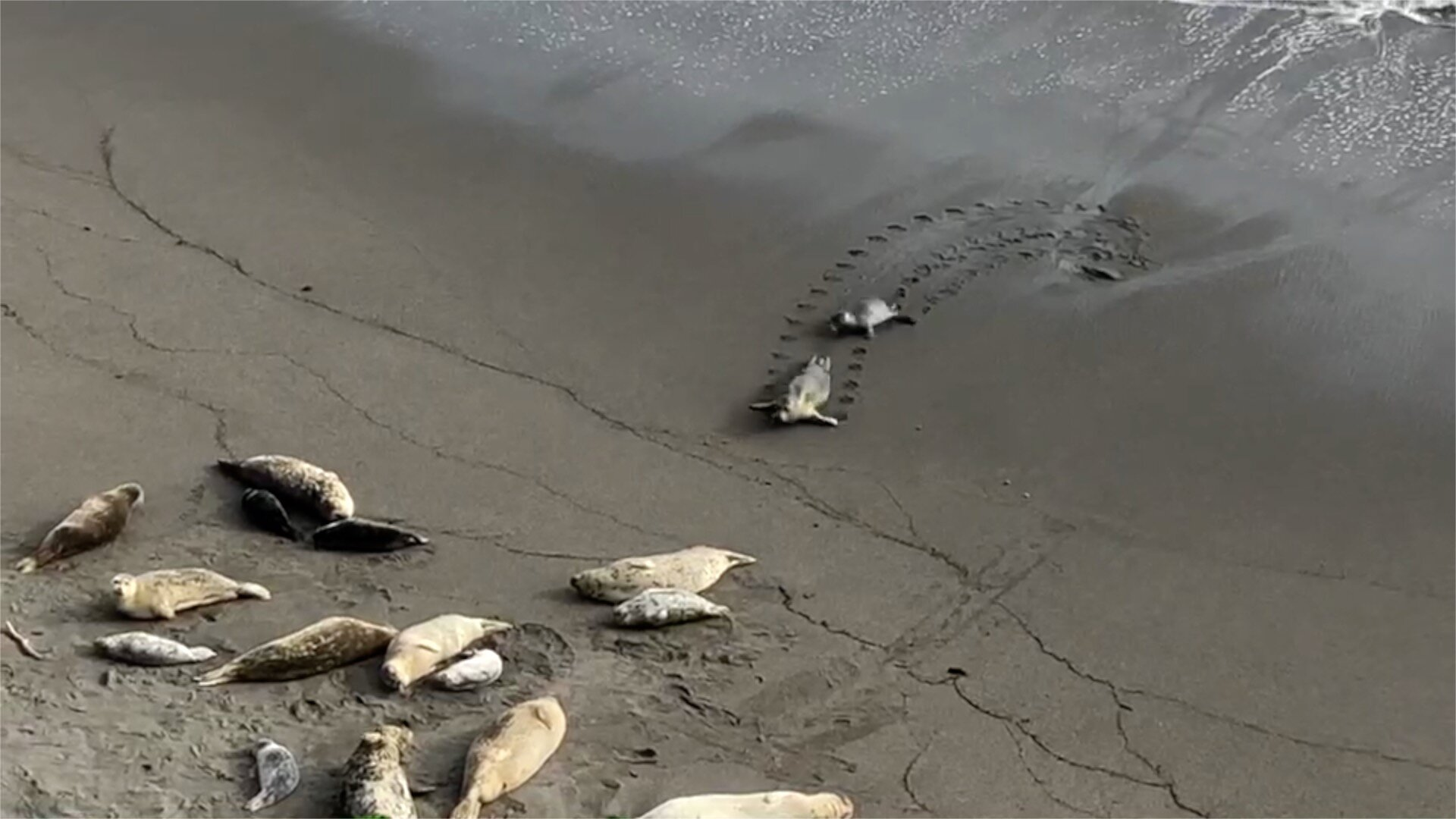 Watch this one-minute   video   taken on a beach 500 yards from Casa Pacis (Courtesy of Oana Marcu, September 2019)