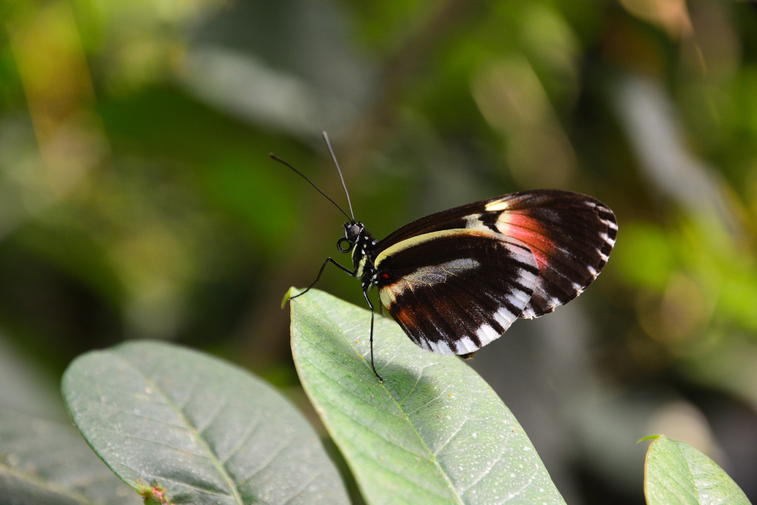2013bufferflies-50.jpg