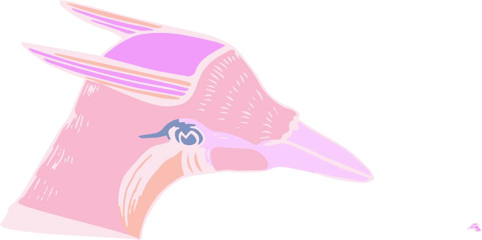 Bird-Head.jpg